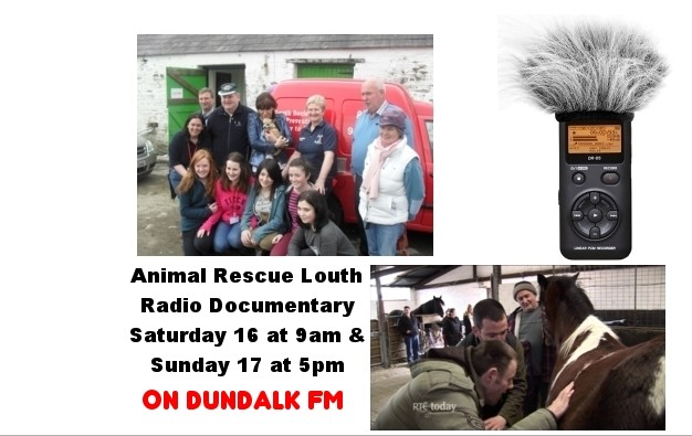 Animal Rescue Louth